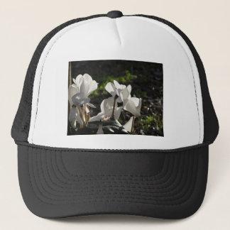 Boné Flores brancas do cyclamen de Backlits no fundo
