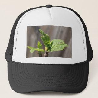 Boné Folha de figo fresca