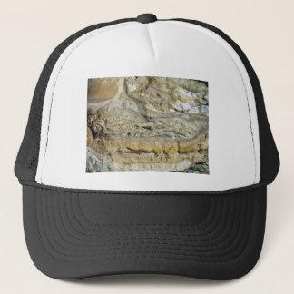 Boné Fósseis da raiz na paredão da pedra calcária