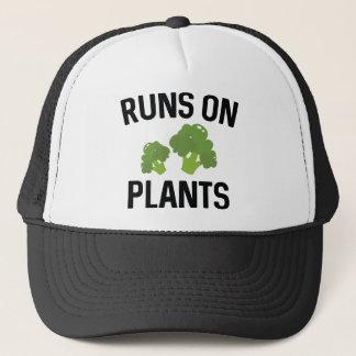 Boné Funcionamentos em plantas