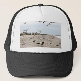 Boné Gaivotas que voam, estando e comendo na praia