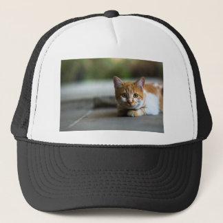 Boné Gatinho alaranjado do gato malhado