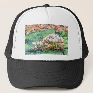 Boné Grupo de cogumelos no coto de árvore verde