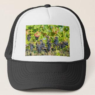Boné Grupos azuis de suspensão da uva no vinhedo