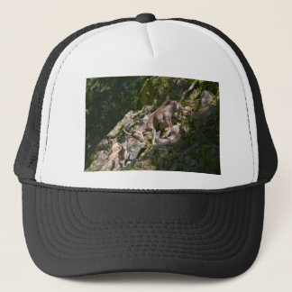 Boné Íbex alpino na montanha
