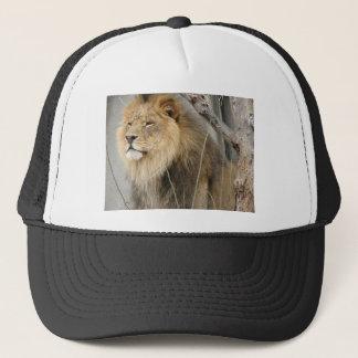 Boné Leão estóico que olha fora na distância