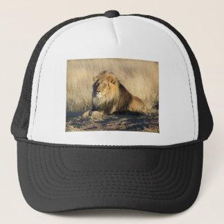 Boné Leão que lounging em Nambia