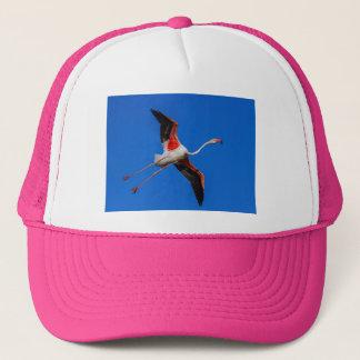 Boné Maior flamingo, roseus do phoenicopterus