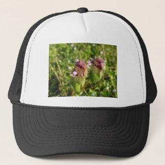 Boné Morto-provocação roxa (purpureum do Lamium) no
