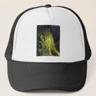 Boné O musgo verde no detalhe da natureza de musgo