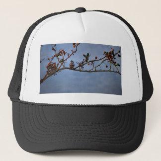 Boné passarinho Dobro-barrado no ramo