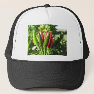 Boné Pimentas vermelhas e verdes que penduram na planta