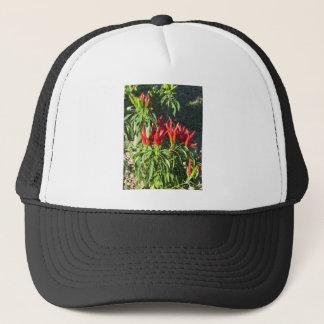 Boné Pimentas vermelhas que penduram na planta.