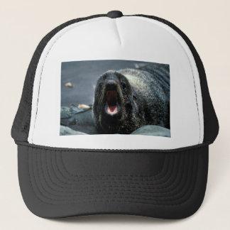 Boné Retrato do lobo-marinho