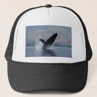 Boné rompimento da baleia do humback