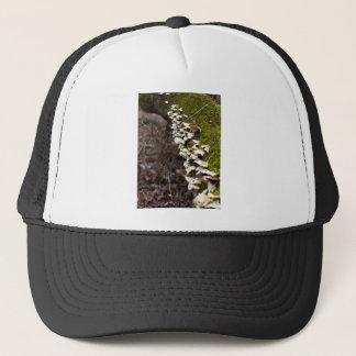 Boné tree_moss_winter mushroom_downed