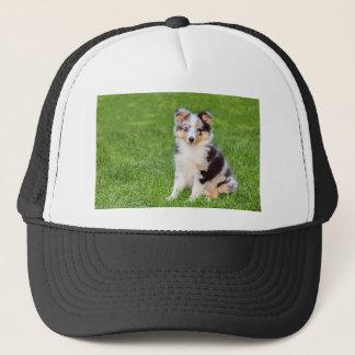 Boné Um cão novo do sheltie que senta-se na grama