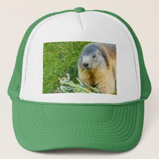 Boné uma marmota sociável no chapéu do camionista