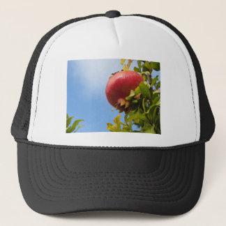 Boné Única fruta vermelha da romã na árvore nas folhas