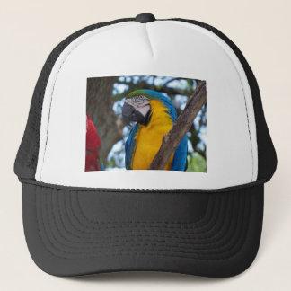 Boné Verde amarelo e Macaw tropical azul
