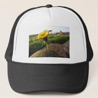 Boné Wildflower amarelo que cresce em pedras no por do