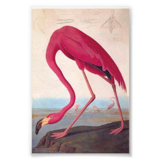 Bookplate cor-de-rosa americano do vintage de impressão de foto
