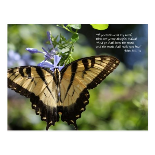 Borboleta amarela de John 8 Swallowtail Cartões Postais