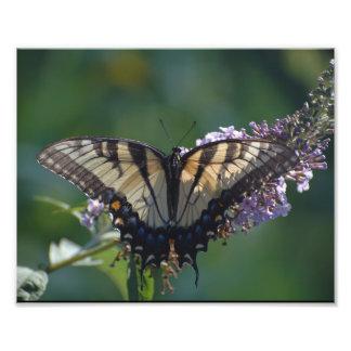 Borboleta amarela de Swallowtail Foto