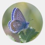 borboleta azul adesivos redondos
