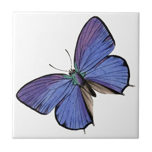 Borboleta azul azulejos