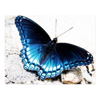Borboleta azul bonita cartão postal