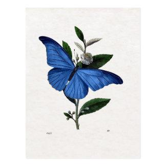 Borboleta azul cartão postal