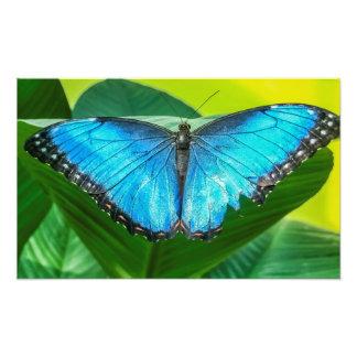 Borboleta azul de Morpho Foto