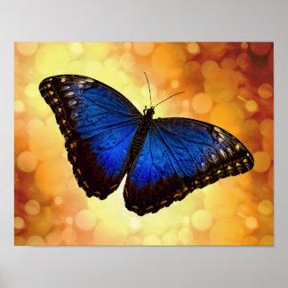 Borboleta azul de Morpho Pôster