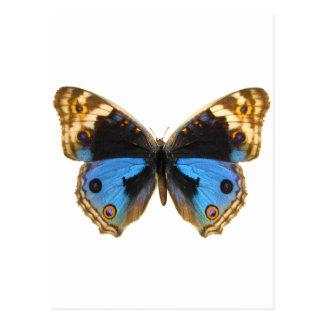 Borboleta azul do amor perfeito cartão postal