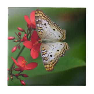 Borboleta branca em flores vermelhas azulejo de cerâmica