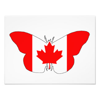 Borboleta Canadá Foto