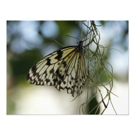borboleta convites