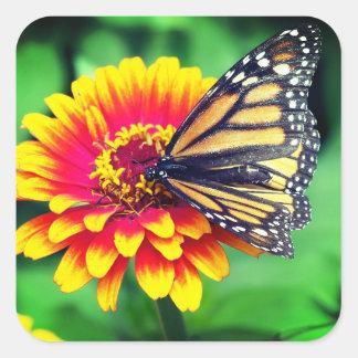 Borboleta de monarca adesivo quadrado