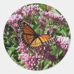 Borboleta de monarca adesivos redondos