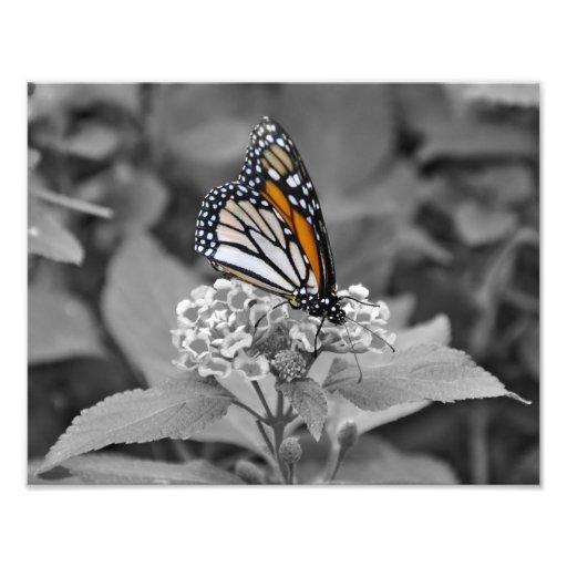 Borboleta de monarca arte de fotos
