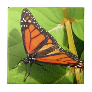 Borboleta de monarca azulejo