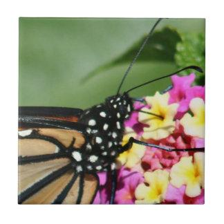 Borboleta de monarca, azulejo do Lantana Flowers.C