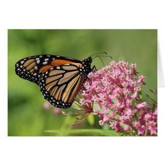 Borboleta de monarca cartão