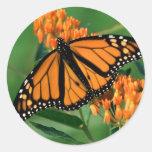 borboleta de monarca das borboletas adesivo redondo