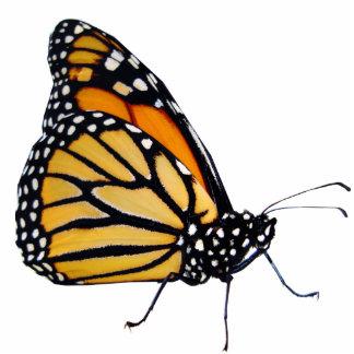 Borboleta de monarca escultura de fotos
