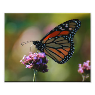 Borboleta de monarca foto