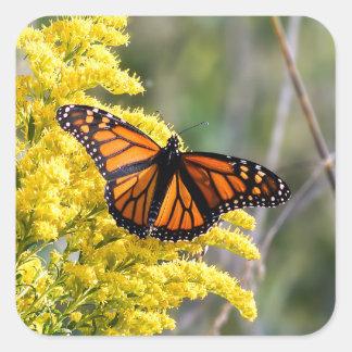 Borboleta de monarca na etiqueta Goldenrod
