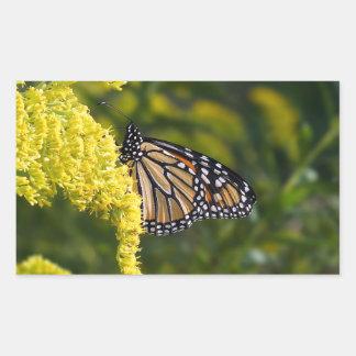 Borboleta de monarca na etiqueta Goldenrod do