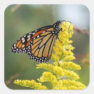 Borboleta de monarca na etiqueta quadrada
